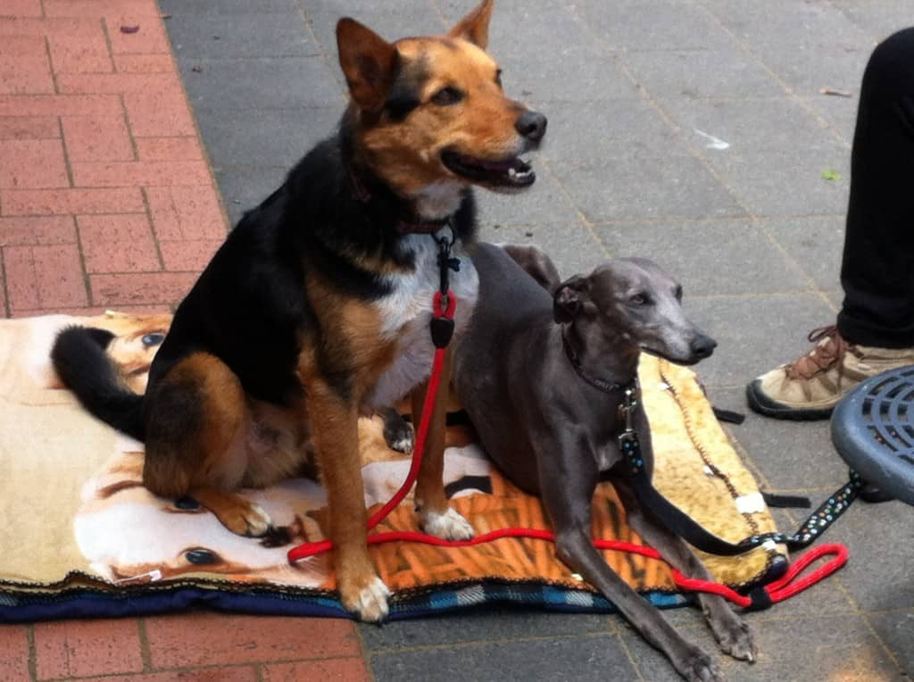 Two dogs lying on blanket by cafe table