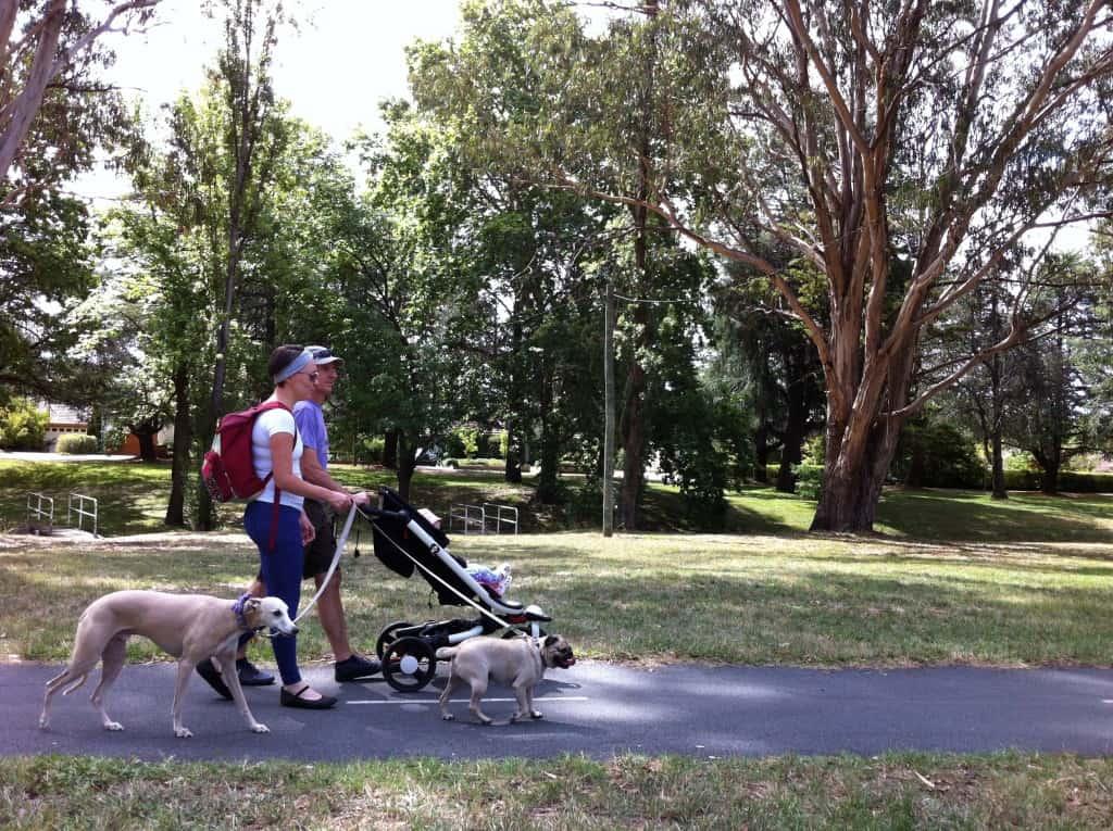 Canberra pram friendly dog walks - Kingston