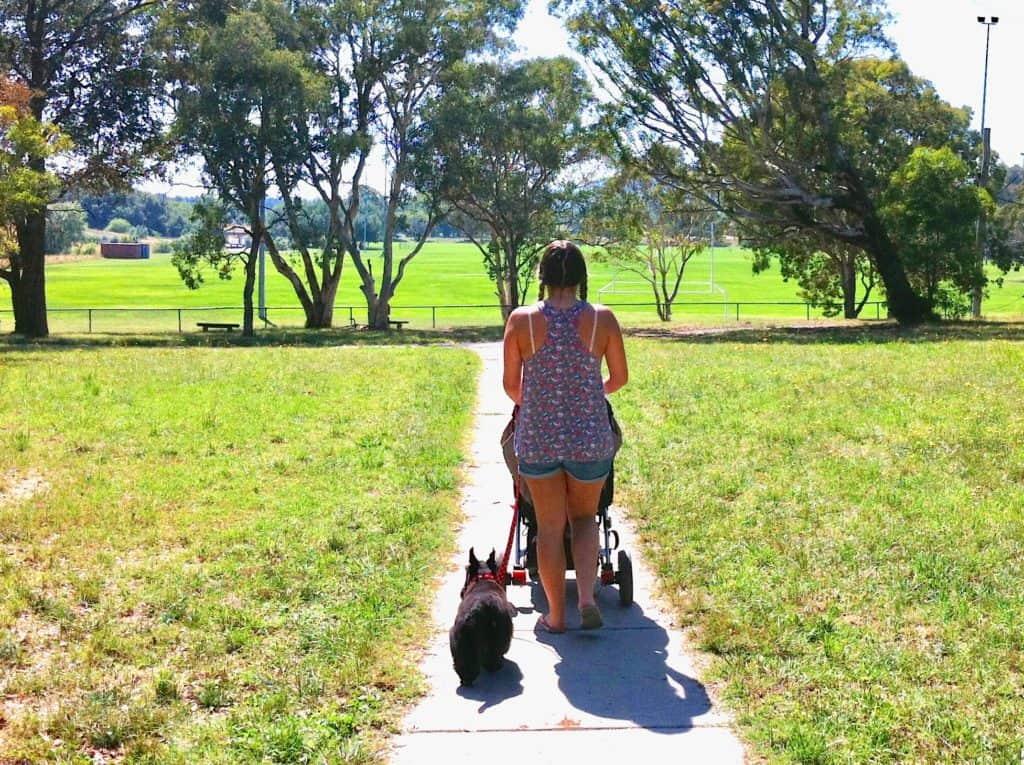 Dog Friendly Bush Walks Canberra