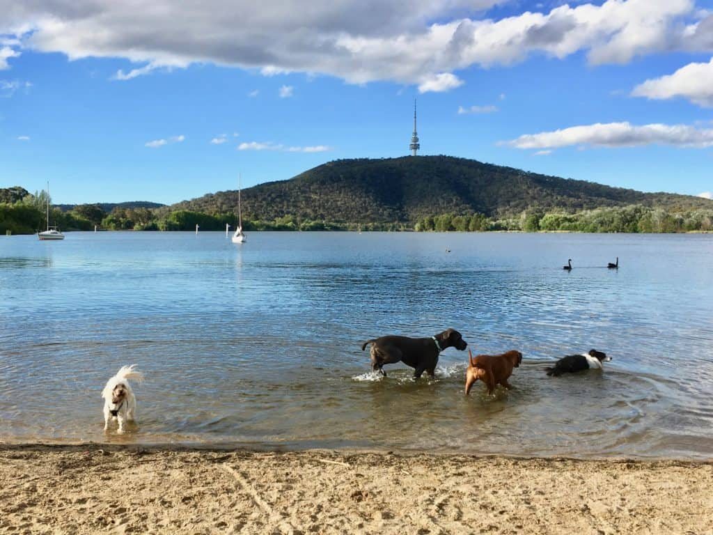 Canberra dog swimming areas - our favourites - Canberra Dog