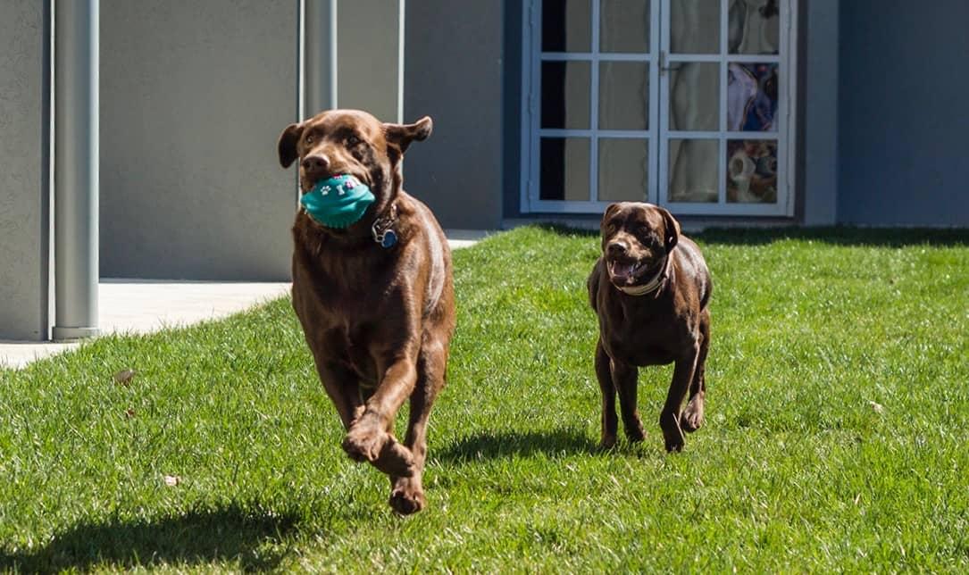Canberra dog friendly accommodation - Canberra Dog Walks