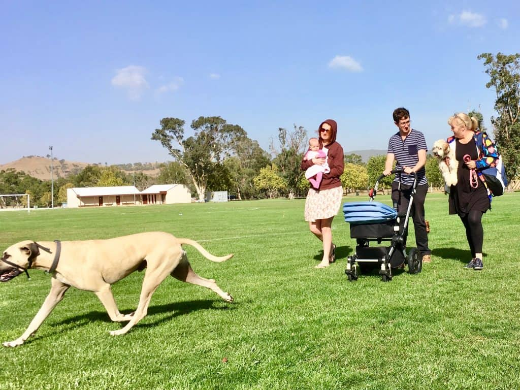 Canberra Bush Walks With Dogs