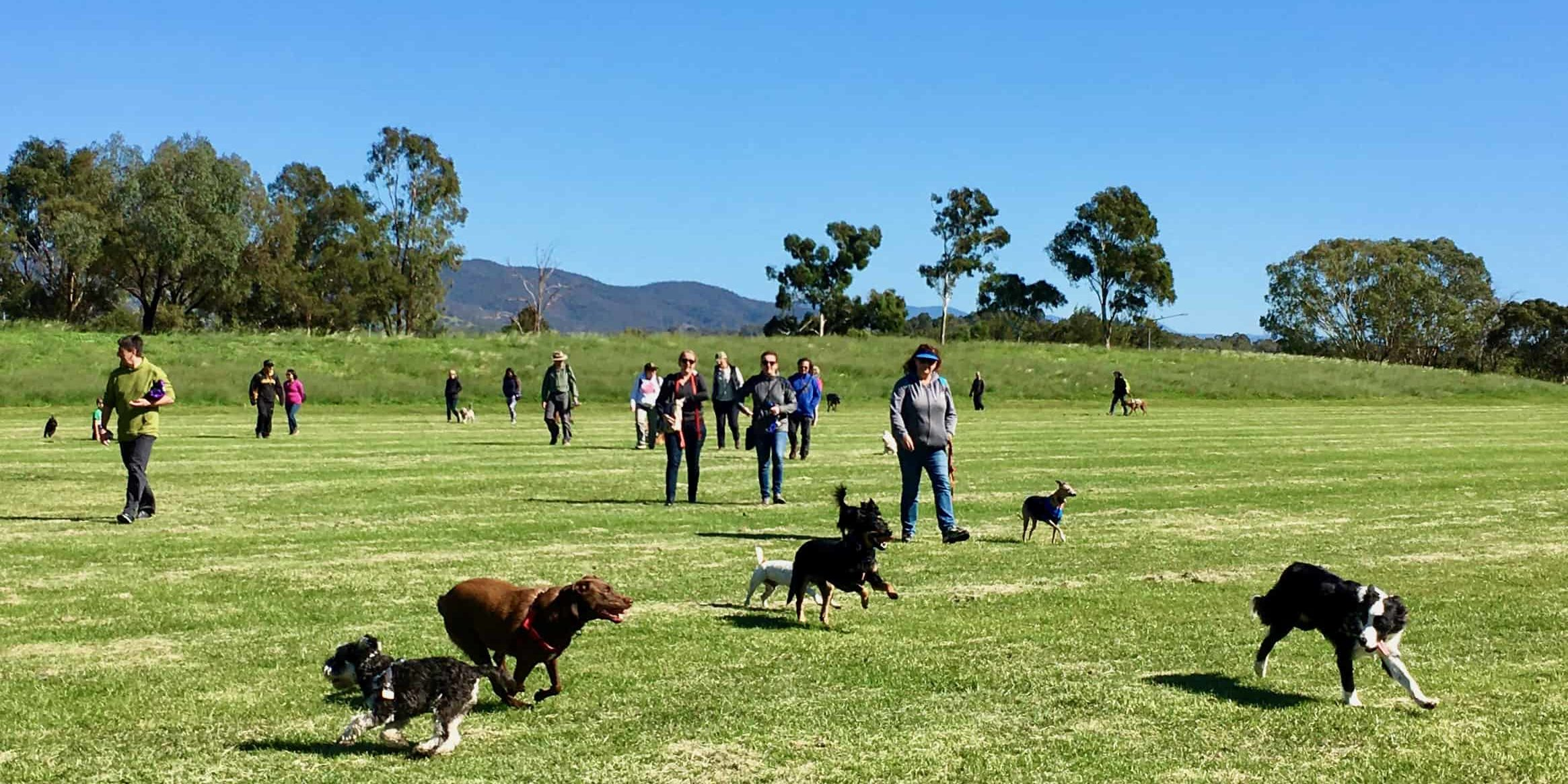 Safe off leash opportunities