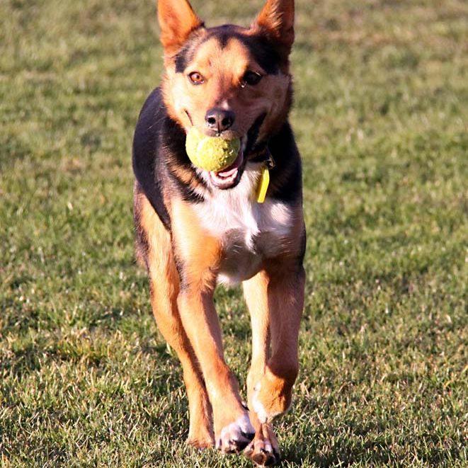 portraitcalicodog