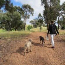 Curtin walk